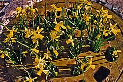 Grate Spring