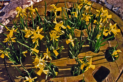 Grate Spring Sculpture